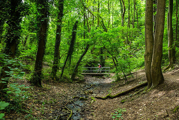 Wildromantische Aussicht in den saftig grünen Wald