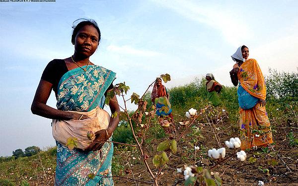 Afrikanische Frauen bei der Baumwollernte