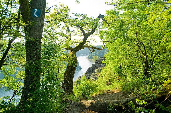 Tolle Aussicht durch saftiges Grün auf den Rhein im Tal